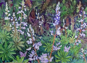 KarnerloveLupine3x490++Karners Love Wild Lupine, 22 x 30, watercolor, ©2011 Helen R Klebesadel, Private Collection