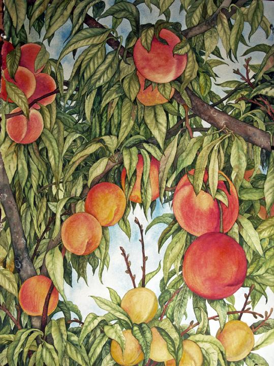 Helen Klebesadel, Peaches,  watercolor, 30x22