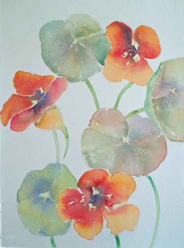 Nasturtiums, watercolor